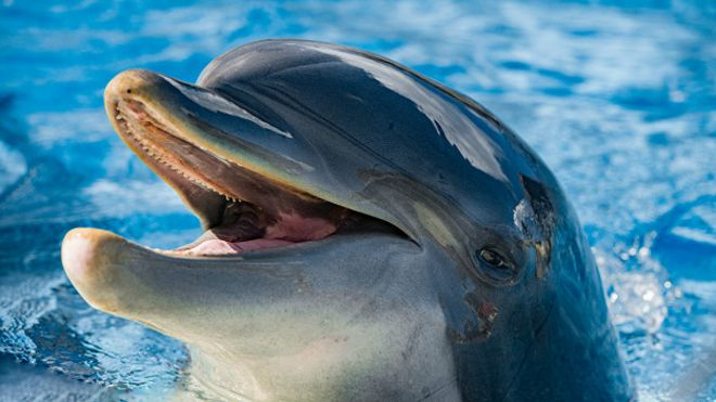 160216102956_dolphin_smiling_624x351_thinkstock_nocredit