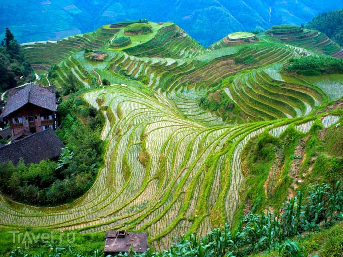 rice_terraces_9