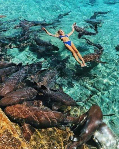 Лайк үшін акулалармен суретке түскен инстаграм-модель қолынан айырыла жаздады (фото)